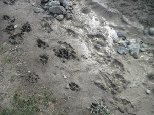 IMG_0167 prints footprints