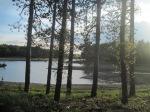 IMG_7639 tree pond