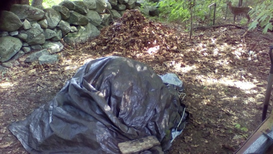 Had to consolidate two compost piles and tarp due to critter destruction. It is really cooking well now though! The engine is hot!