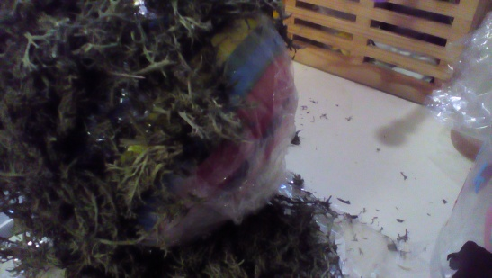Stole one of the kids balls, wrapped it in plastic wrap, and tacky glued on moss.