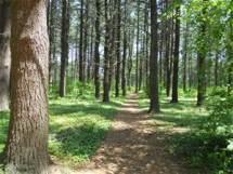 runningtrail trees